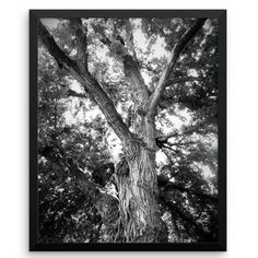 Kansas photography for digital download or printing at #KatandKout on #etsy   #art #print #digital #framedphotoprint #Kansas #instamood #photography #tree #nature #bw_lover #bnw #earthfever #etsyusa #etsyhome http://etsy.me/2DpI9vP