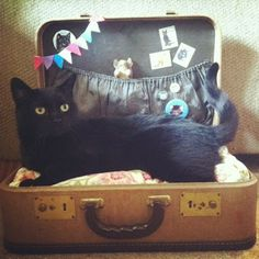 Catsparella's suitcase pet bed--don't forget to add dowels so the lid won't close! http://www.catsparella.com/2012/05/diy-vintage-suitcase-cat-bed.html