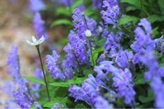 初夏  #art #artwork #写真 #photography #アート#my photos  #photo #花 #植物 #flowers #風景 #landscape