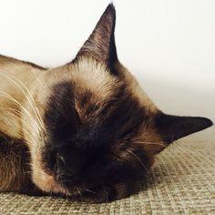 My Best girl #siamese #cat #polish #girl