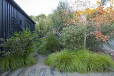tips landscape design Country Landscaping, Modern Landscaping, Backyard Landscaping, Landscaping Design, Australian Garden Design, Australian Native Garden, Garden Landscape Design, Landscape Architecture, Drought Tolerant Garden