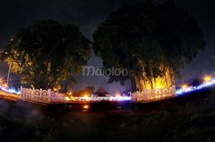 Dua pohon beringin yang menjadi ikon di Alun-alun Kidul Yogyakarta. (Reza Fitriyanto/Maioloo.com)