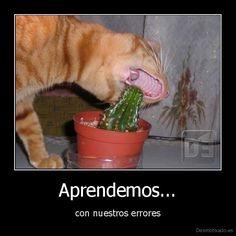 """Fun Spanish quote: we learn from our mistakes. """"Aprendemos con nuestros errores"""" - also """"aprendemos de nuestros errores."""""""