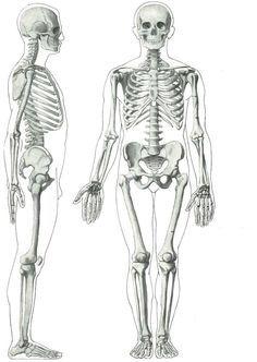 Lidská kostra :: Somatologie pro SZŠ Pre School, Geography, Anatomy, Unit Studies, The Unit, Education, Massage, Medicine, Tela