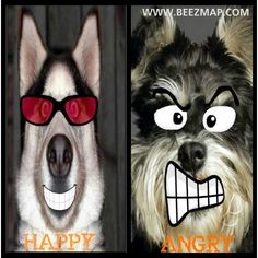 Happy and Angry Dog