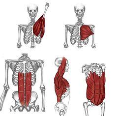 옆모습 뼈에 대한 이미지 검색결과