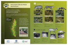 Áreas Naturales Protegidas de Tucumán. Design: Cecilia Estrella.  Sign - Park - Infographic - animals - camera tramp - Map - biodiversity