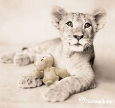 Arjuna and Teddy (Lion Cub) ~ Rachael Hale Photography