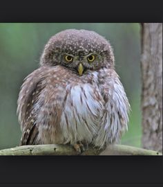This owl is cute