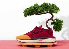 푸마 쓰기 신세이 일본문화팩 '일본정원','와사비(겨자)' 2가지 컬러 발매 :: 9NEES x SNEAKERS Photo Reference, Vans Old Skool, Trainers, Photograph, Sneakers, Inspiration, Shoes, Fashion, Outfits