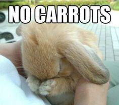 我不想再吃紅蘿蔔了啦!