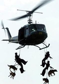 """Navy SEALS and Navy DOGS! This is an amazing photo of the Navy Seals repelling from a helicopter with their dog""""s. The Navy Seals will actually do this. Great action picture with only the rotary blades showing motion. Military Working Dogs, Military Dogs, Police Dogs, Military Salute, Military Honors, War Dogs, Perros Golden Retriever, My Champion, Tier Fotos"""