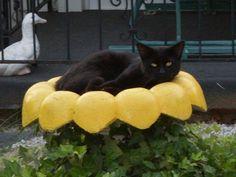 Neighbors cat in the birdbath!