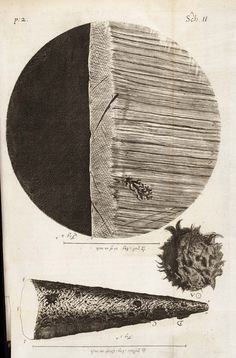 Hooke, Robert, 1635-1703 / Micrographia: or some physiological descriptions of minute bodies made by magnifying glasses : with observations and inquiries thereupon  (MDCLXVII [1667])    [Observ. I. Of the point of a sharp small needle],   pp. Schem: I-4