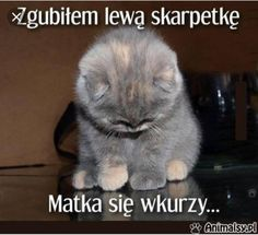 Funny Facts, Funny Memes, Hilarious, Jokes, Animals And Pets, Cute Animals, Polish Memes, Weekend Humor, Equestria Girls