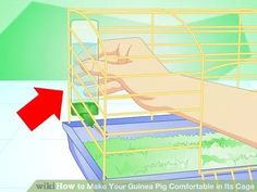 Image titled Make Your Guinea Pig Comfortable in Its Cage Step 7