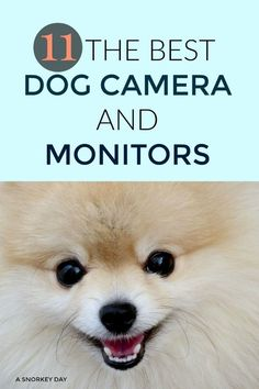 11 THE BEST DOG CAMERA AND MONITORS. Are you wondering what is happening when your dog is alone at home? Here is the list of the best 11 cameras for dogs, you can find the perfect one for you. Dog Health Tips, Dog Health Care, Rescue Dog Quotes, Rescue Dogs, Pet Camera, Cute Dog Photos, Dog Pin, Dog Boarding, Dog Care