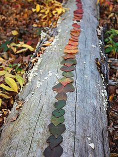 Outdoor Sculpture: Try sorting fallen leaves by color, as shown below. If you're leafless, stack stones in towers, or arrange sticks on the ground in spirals and swirls. When your child's masterpiece is complete, take a photo, then leave the art to surprise the next nature lover who comes along.    (Blog we love: This leaf project is from lilfishstudios.com, where Lisa Jordan shares her family's adventures in the woods of Minnesota.)