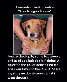 NO #pets on #craigslist NO #free to a good home pic.twitter.com/KjWfMNurPG