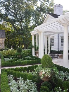 Beautiful formal garden framed by boxwood. Now imagine edibles in the spaces: artichokes, onions, kale, cabbage, etc would look amazing.