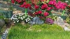 장미와 꽃 동산3