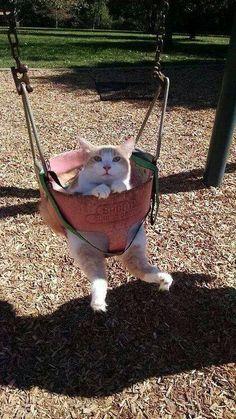 Poor cat, lol.