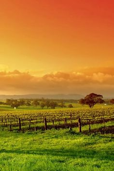 Country Australia ~ the Barossa Valley, South Australia. One of the oldest (and most beautiful) wine regions