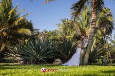a quiet moment under the palms - El Dorado Royale, by Sarani Weddings