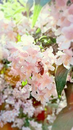 Save the #Bees! Ohne #Bienen wären wir ganz schön arm dran! Sooo fleißig!  © by Tamara's Mikrokosmos