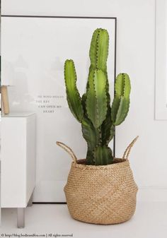 Cactus in a basket, interior design, indoor plant, planter idea