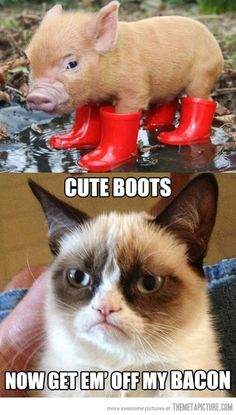 Funny pictures about The Adventures of Piggy and Grumpy Cat. Oh, and cool pics about The Adventures of Piggy and Grumpy Cat. Also, The Adventures of Piggy and Grumpy Cat. Grumpy Cat Quotes, Funny Grumpy Cat Memes, Funny Animal Memes, Funny Animal Pictures, Funny Images, Funny Cats, Funny Animals, Funny Quotes, Grumpy Kitty
