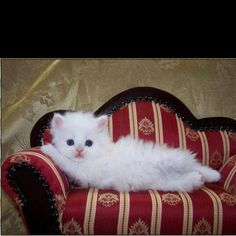 """""""Draw me like one of your french girls, Jack"""". Rose Dawson from Titanic.....hahahaha, too cute! ;)  Source: And my cat magazine"""