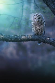 owls - mystery, magic, darkness, the moon...
