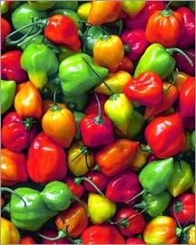 Steve Terrill - Frisch gepflückte Habanero-Paprika Poster Online, Stuffed Peppers, Vegetables, Food, Food And Drinks, Red Peppers, Stuffed Pepper, Essen, Vegetable Recipes