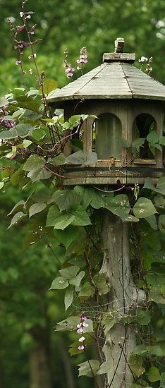 "the green cottage .. X ღɱɧღ ||birdhouse               *like the idea of the wire ""fencing"" around the post for climbing vines"