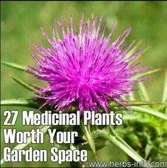 Medicinal Plants[➕LAVANDE] Lavander / Lavande➖♀️♀️More Pins Like This At FOSTERGINGER @ Pinterest ♂️✖️