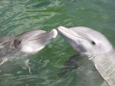 dolphins pics | Free Dolphin Wallpaper, Screensavers, Pictures, Videos and Site Seeing ...