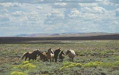 Wild Horses near Rock Springs WY