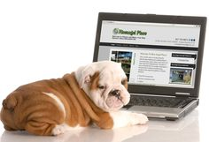 place the logo, images, text, or your website on a screen com. Pet Shipping, Your Website, Forever, Advertising Design, French Bulldog, Projects To Try, Logo Design, Pets, Logos