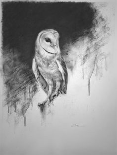 """Barn Owl"", charcoal drawing."