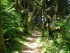 A difficult to moderate 3 mile round trip which includes a 700 foot elevation gain.  A beautiful hike which takes you through spruce woods carpeted with beautiful wild flowers and delivers you to a place where you are treated to 150 miles north-to-south panoramas of the awe inspiring Oregon Coast.