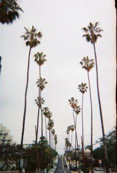 Palms // #LA