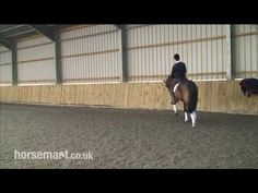 How to shoulder in for dressage with Andrew Gould and Daniel Timson