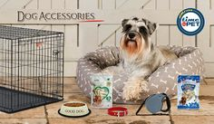 Personalized and comfortable accessories for your dogs at attractive deals and offers Buy now: http://bit.ly/2gsDgWg #timeforpet #dogaccessories #dogs #dog #accessories #dogneeds #doglove #pets #pet #petlove #petneeds #petaccessories #petcare #bangalore #monday