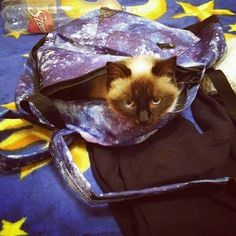 Cat in the bag 😊😻 Cat Art, Cats, Instagram Posts, Animals, Gatos, Kitty Cats, Animaux, Animal, Cat