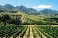 Waipara West Winery, Waipara Valley, North Canterbury, New Zealand
