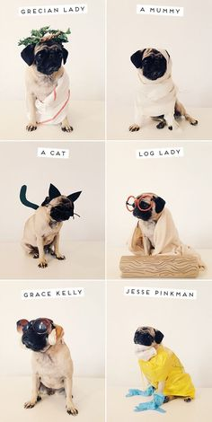 Pug costumes.