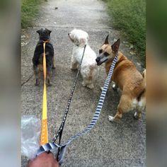 Benitta, Luna y Cirilo paseando por el parque