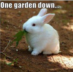 When you have goals... #rabbit #rabbits #rabbitlove #rabbitlife #bunny #bunnylove #bunnylovers #bunnyrabbit #bunnylife #pet #pets #cute