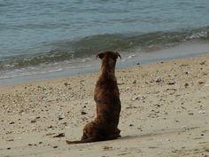 pes a moře -Thaja